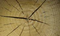 Holz_